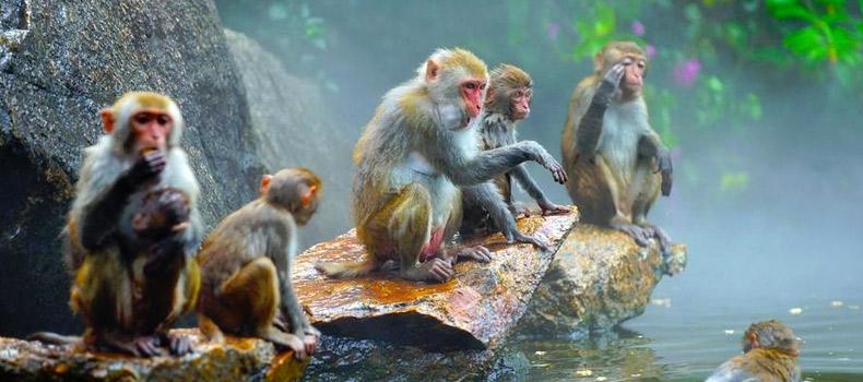 Хайнань «Остров обезьян» (уезд Линьшуй).