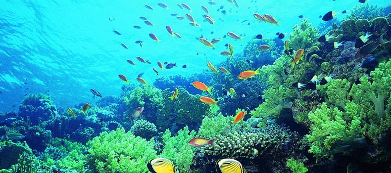 Океанариум в Хайнане.